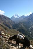 Looking up the valley towards Thyangboche.jpg